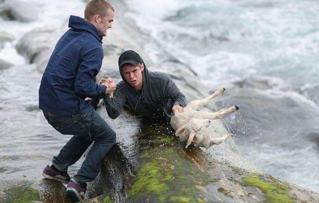 Dünyanın daha yaşanılır bir yer olmasını sağlayan iyi insanların varlığıdır. Her daim çevremizde olan ancak pek de farkında olmadığımız iyi insanların varlığını kanıtlayan bazı fotoğrafları...  İki cesur Norveçli genç dalgaların denize düşen kuzu için kendi hayatlarını riske attılar.