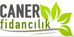 CANER FİDANCILIK