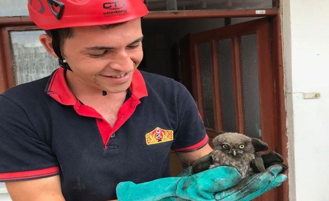 Bacaya sıkışan yavru baykuş kurtarıldı