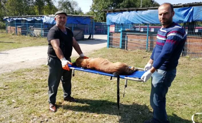 Karasu Belediyesi, Sokak Hayvanlarına Yönelik Veterinerlik Hizmetlerine Devam Ediyor