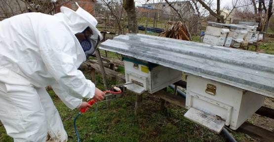 Arı Ürünleri Tıp Alanında Şifa Dağıtacak