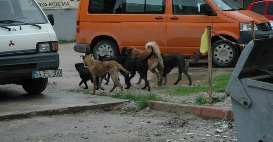 Başıboş Köpekler Sokakları istila etti