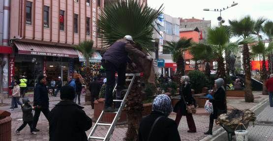 Palmiye ağaçları Soğuktan Çuvala Sarılarak Korunuyor