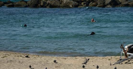 Sıcaktan Bunalan Köpek Denizde Serinledi