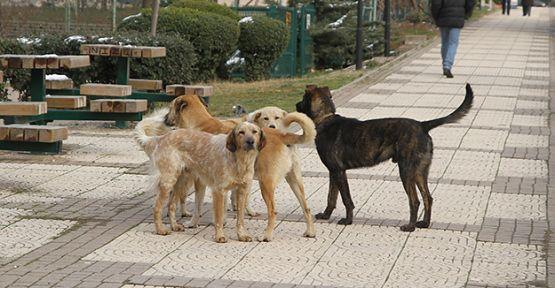 Sokak hayvanları küpeleniyor