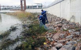 Sapanca Gölü kıyısından 250 torba çöp toplandı