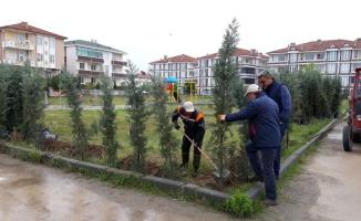 Karasu'da 5 Bin Ağaç Toprakla Buluştu