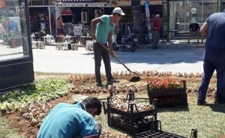 Karasu Belediyesi, ilçenin dört bir tarafını çiçeklerle süslüyor