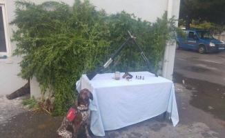Karasu'da Jandarmadan Uyuşturucu Operasyonu