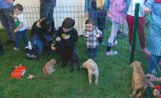 Çocukların Sokak Hayvanları Sevgisi