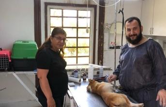 Karasu Belediyesi, Sokak Hayvanlarına Yönelik Çalışmalarını Sürdürüyor