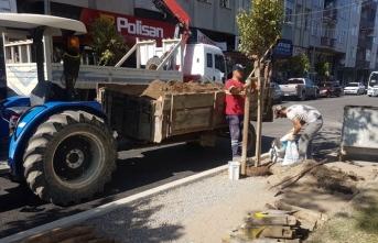 Yeşil Bir Karasu İçin Ağaçlandırma Çalışmalarımız Devam Ediyor