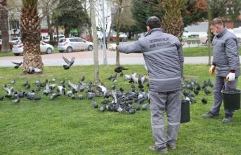 Şehir kuşlarına Büyükşehir desteği