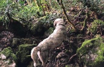Kayalıkta Mahsur kalan köpeği itfaiye ekibi 3 dakikalık çalışma ile kurtardılar