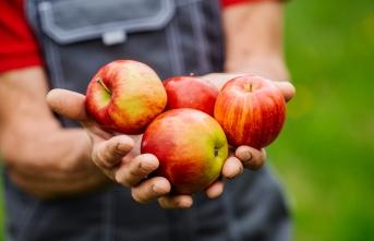 Sağlıklı gıda bir tercih değil haktır