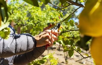 Pandemi yaş meyve sebze ve mamulleri ihracatına fren yaptıramadı