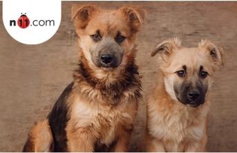n11.com'dan 4 Ekim Hayvanları Koruma Günü'ne