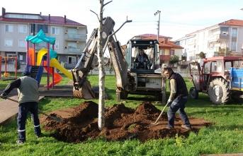 Sökülen Ağaçlar Çocuk Parklarına Dikildi