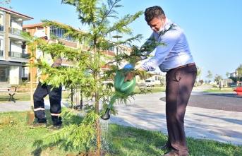 Hedef 3 Bin Ağaç