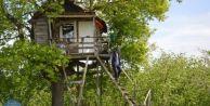 Doğa Tutkunu Vatandaş Ağacın Dalına Ev Yaptı
