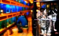 Büyükşehir'den Pet-Shop Eğitimi