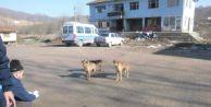 Sokak hayvanları toplandı