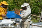 Arı Ürünleri Şifa Dağıtıyor