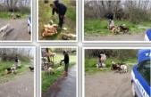 Arifiye Belediyesi Sokak hayvanları unutmadı