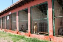 Barınakta 545 hayvana yardım eli uzatıldı