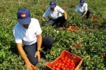 Tat'tan Çiftçisine Destek Paketi
