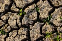 Çölleşme 1,5 milyar insanın hayatını doğrudan etkiliyor