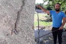 Koaaali'nin Kabusu yılanlar