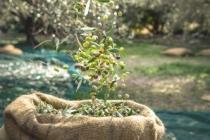 Ambalajlı zeytin ve zeytinyağı ihracatını arttırmak için tarımsal destek gerekli