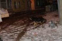 Karasu'da Sokak Hayvanları ve kuşlar İçin Yem Bırakıldı
