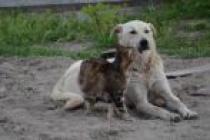 Kim Demiş Kedi ile Köpek Düşman Diye