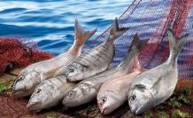 Corona Virüs'e karşı balık, yumurta ve beyaz et kalkanı