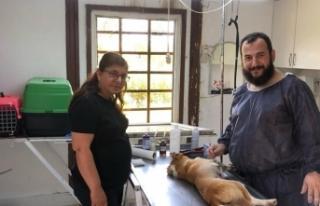 Karasu Belediyesi, Sokak Hayvanlarına Yönelik Çalışmalarını...