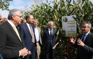 Sakarya mısır üretiminde Türkiye'de öncü olacak
