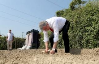Salep üretimi için tohumlar toprakla buluştu