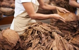 Tütün ihracatında hedef 1 milyar dolar