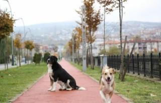 Kısıtlamalarda Sokak Hayvanları Unutulmadı