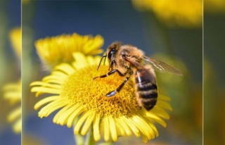 Çiftçilere bitkisel üretimde arı kullanımı eğitimi...