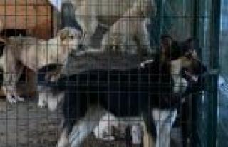 Sokak Hayvanları Sahiplenmeyi Bekliyor