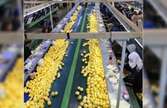 Limondaki ihracat kısıtlaması kaldırıldı