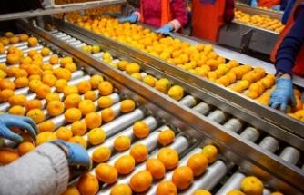 Dünya Türk mandalinasına hücum etti  Türkiye, 1 ayda 110 milyon dolarlık mandalina ihraç etti