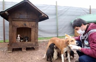 Dünya Sokak Hayvanları Günü'nde 20 yeni yuva