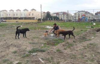 Karasu Belediyesi Can Dostlara Yem Desteğine Devam Ediyor