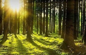 Sakarya'da ormanlara girmek yasaklandı!
