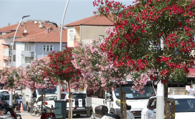 Şehir çiçek açtı