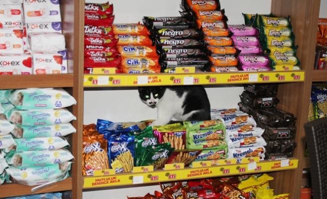 O kedi orda ne arıyor!